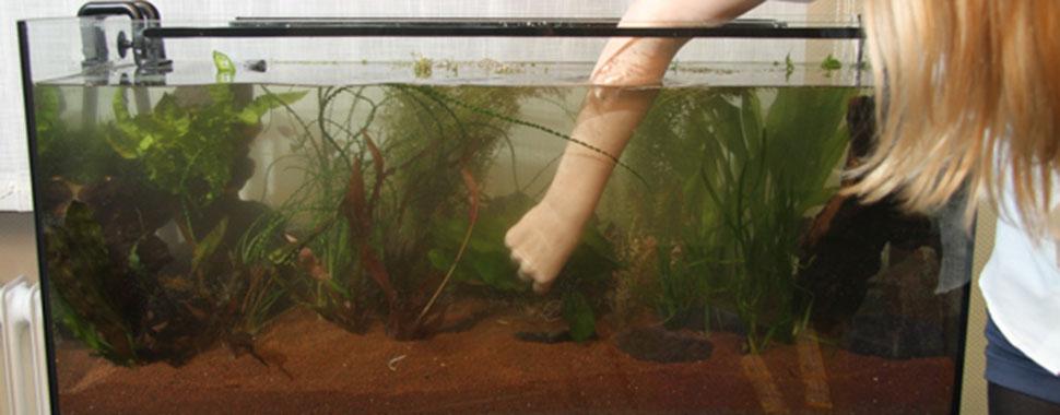 l installation d un aquarium