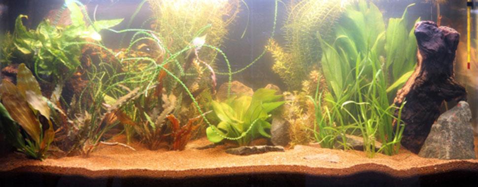 L u0026#39;installation d u0026#39;un aquarium