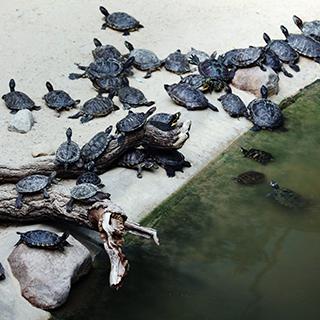 پرورش و نگهداری لاکپشت