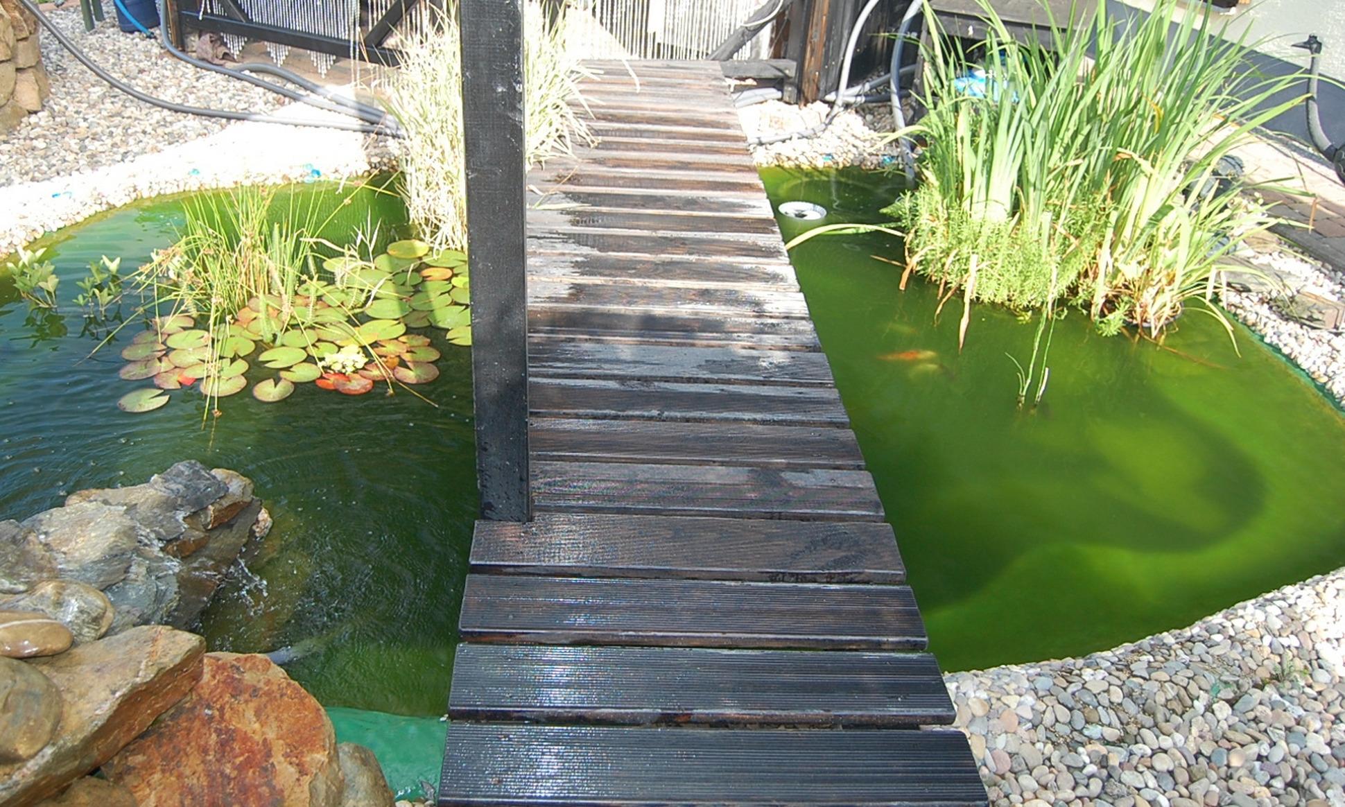 Behandlung von gr nem wasser im gartenteich for Gartenteich algenfrei