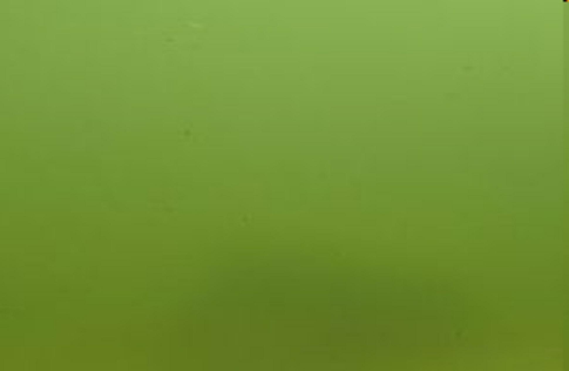 1 2 3 algenfrei tipp der woche for Gartenteich algenfrei