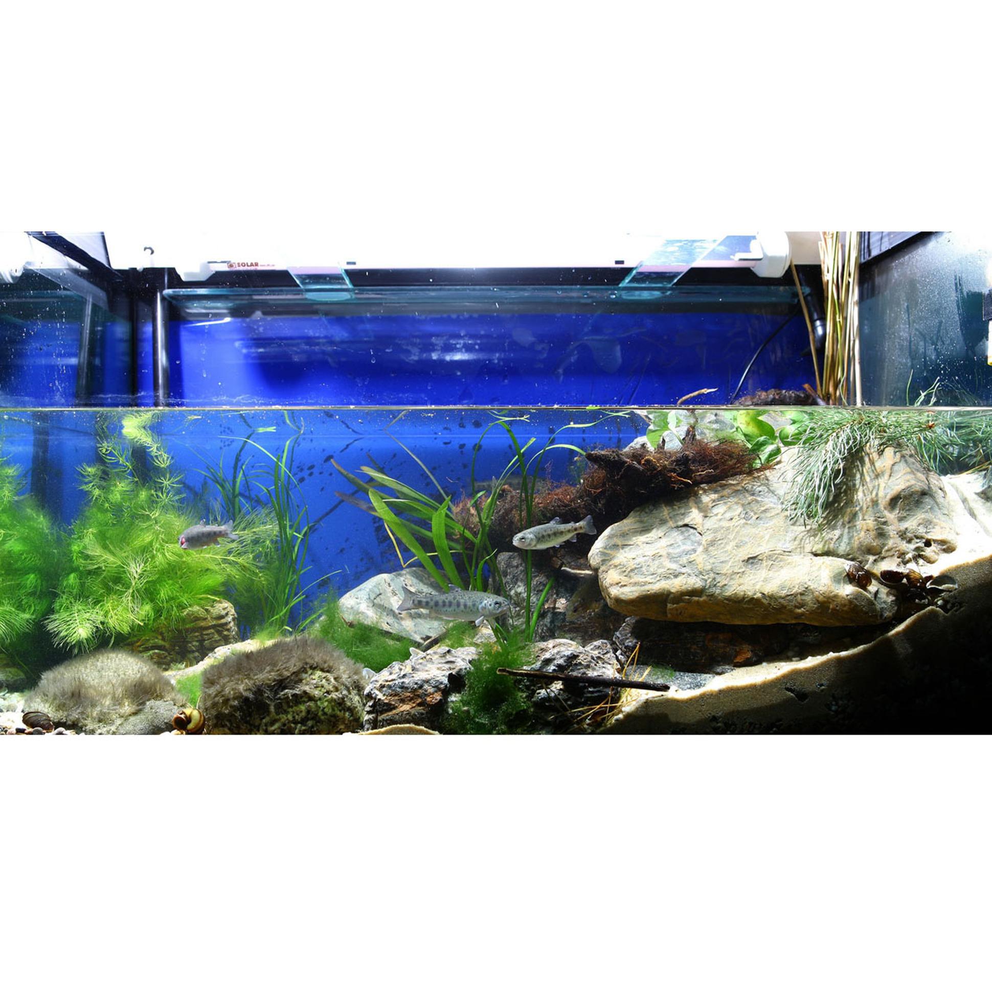 Aquarium Substrate Calculator