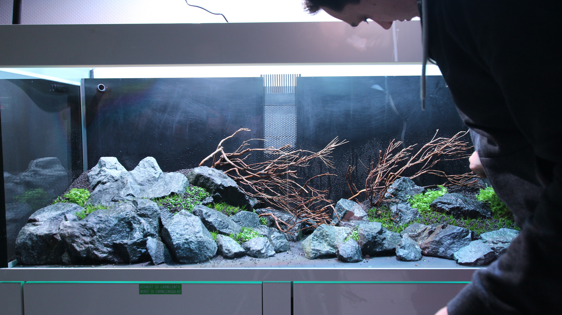 Social Escape – an aquarium slowly and relaxingly takes shape and is