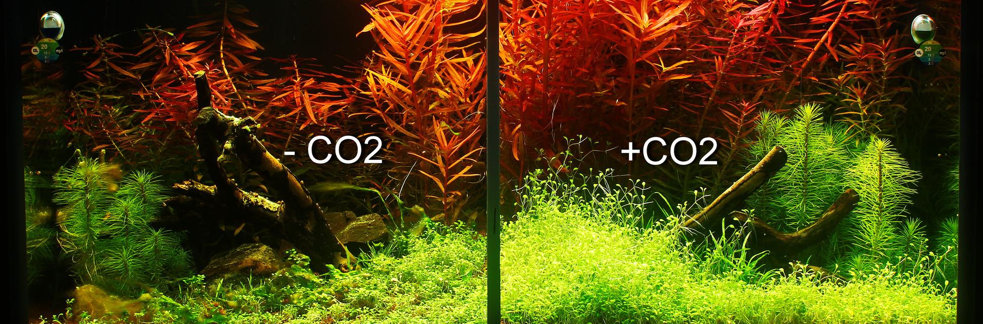 pflanzenaquarium mit und ohne co2 im zeitraffer. Black Bedroom Furniture Sets. Home Design Ideas