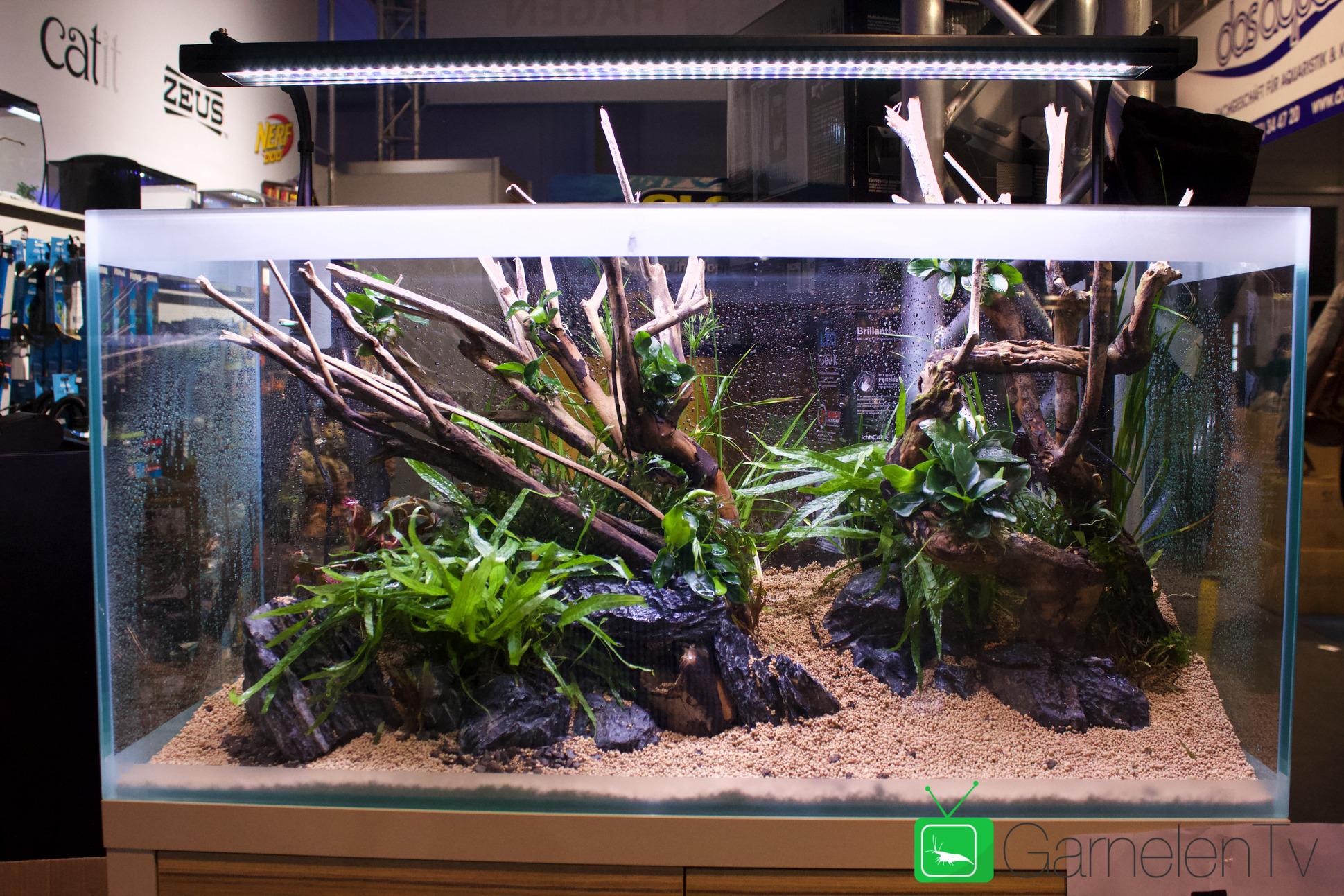 Msad Master School Of Aquarium Design Team 5 The Island Style Aquarium