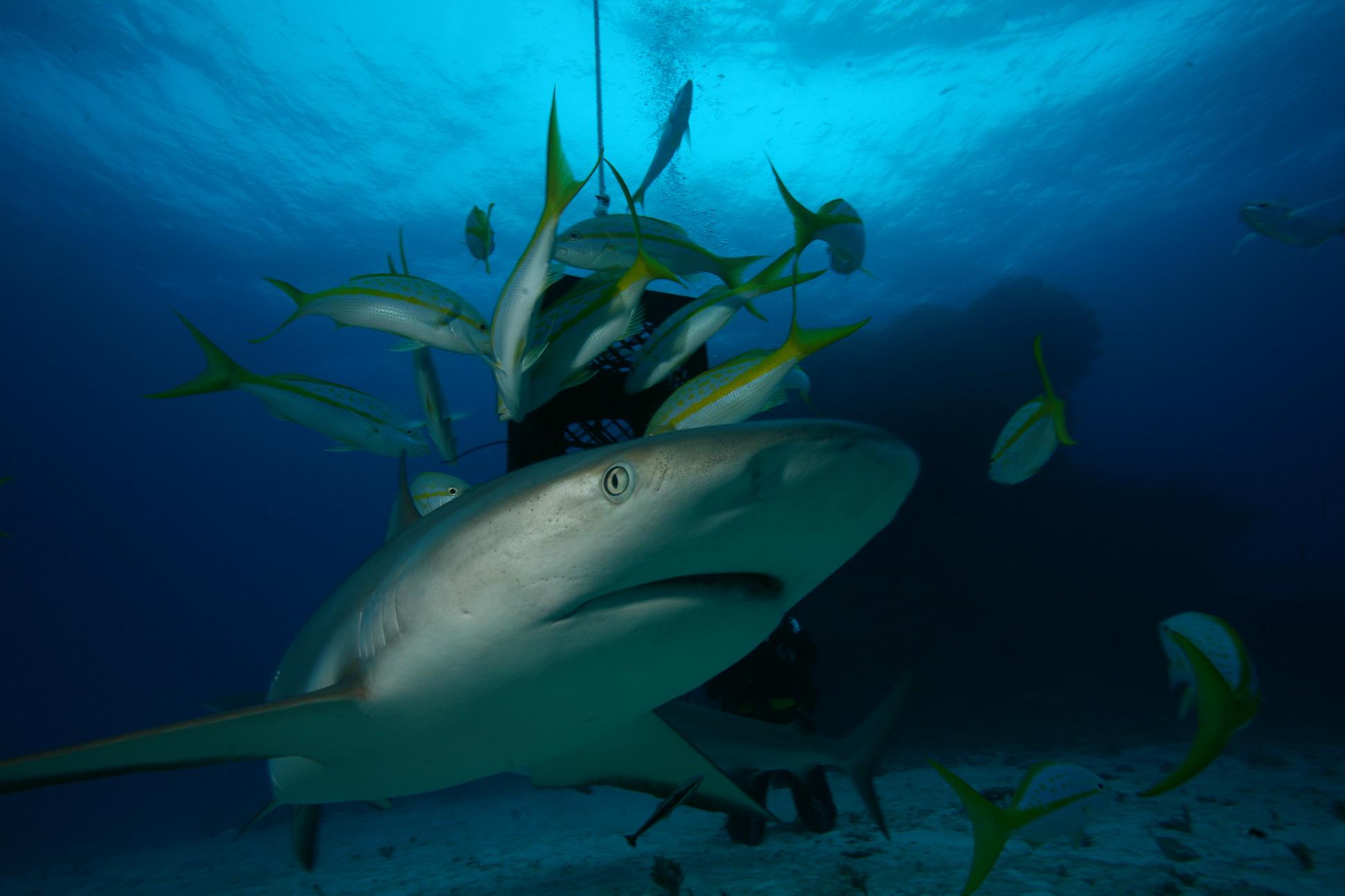 JBL Shark Workshop Bahamas 2018: Day 3 – The Shark Welcome