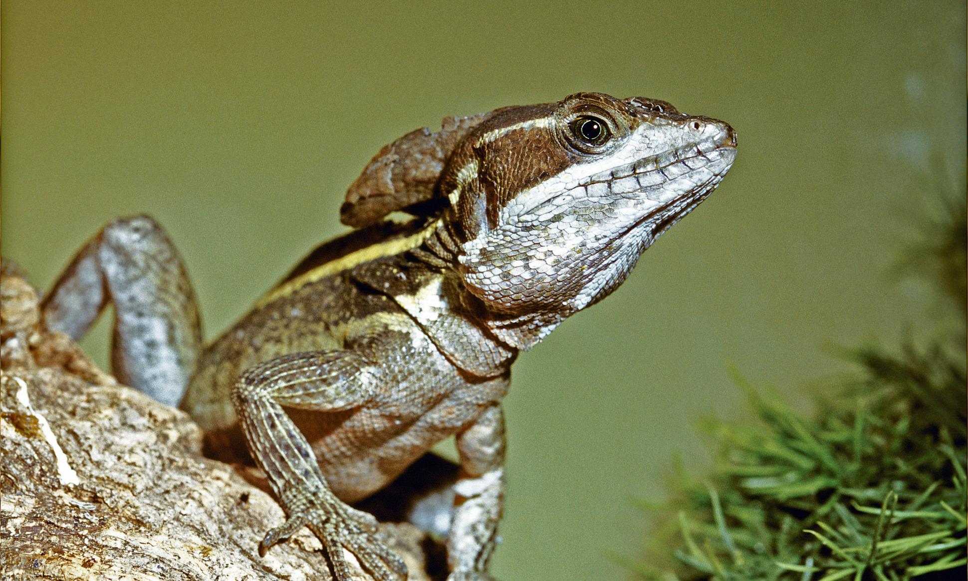 Prodotti Contro I Gechi specie animali