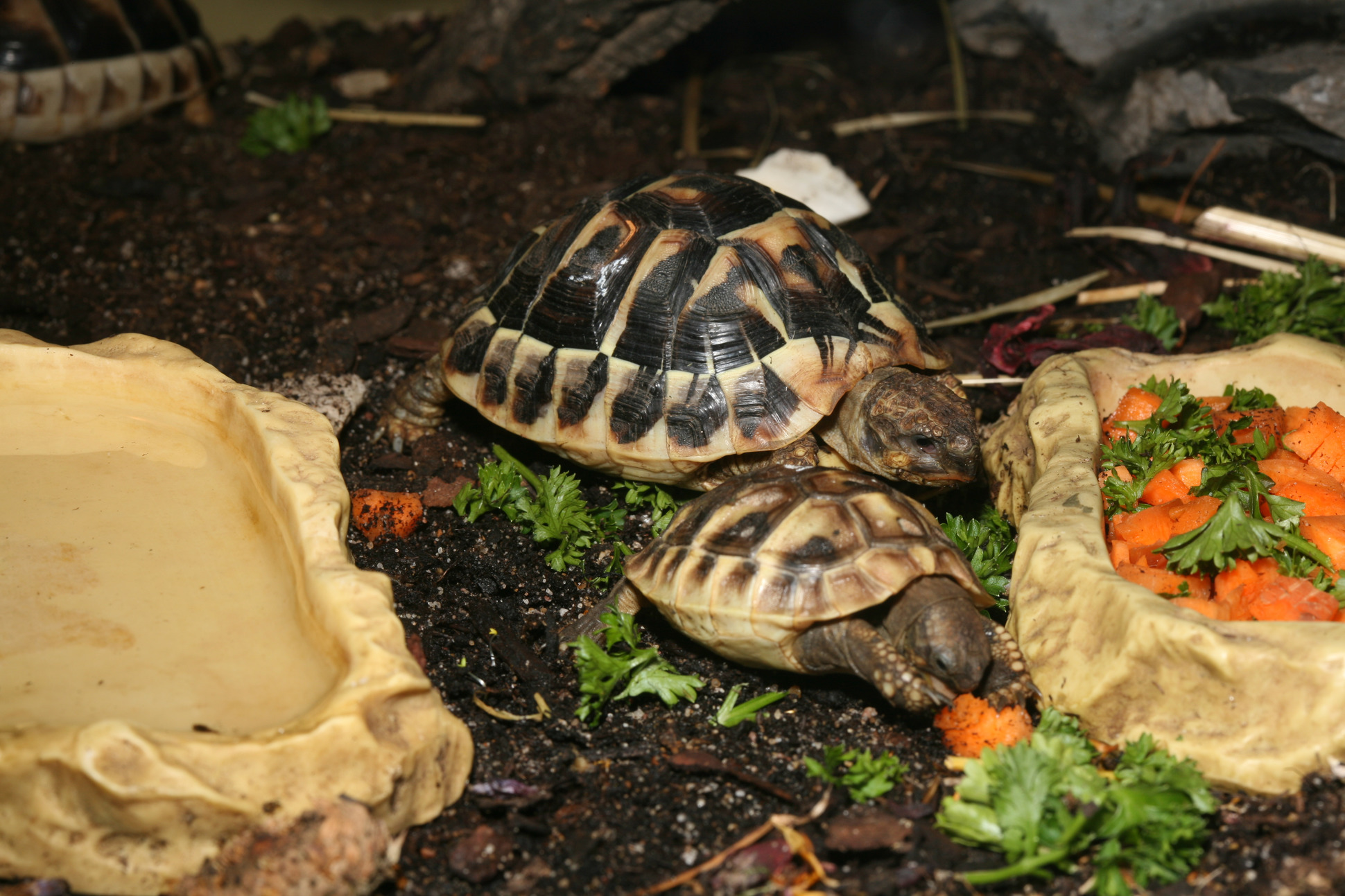террариум для среднеазиатской черепахи фото