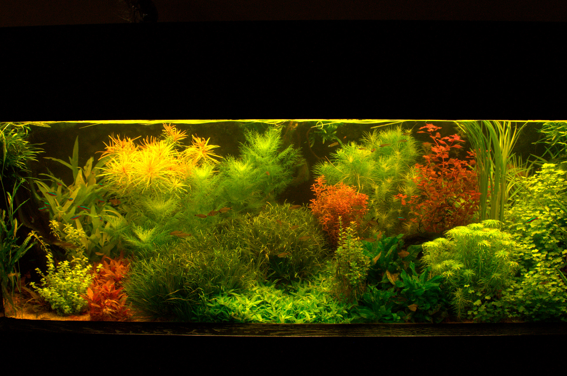 aquarium besatz rechner tobi s flussufer panorama flowgrow aquascape aquarien datenbank die. Black Bedroom Furniture Sets. Home Design Ideas