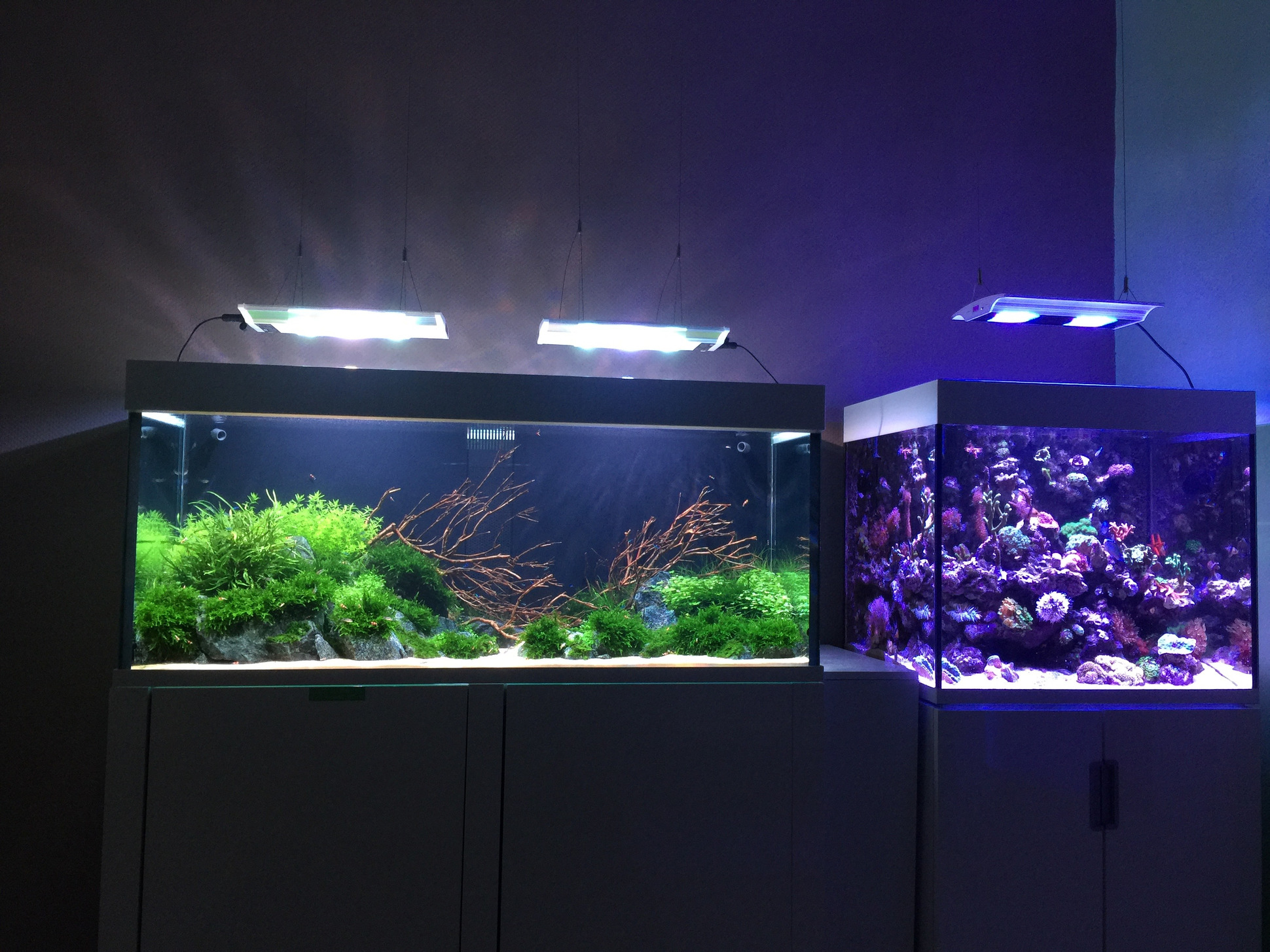 Fish Are Addictive An Aquarist S Life