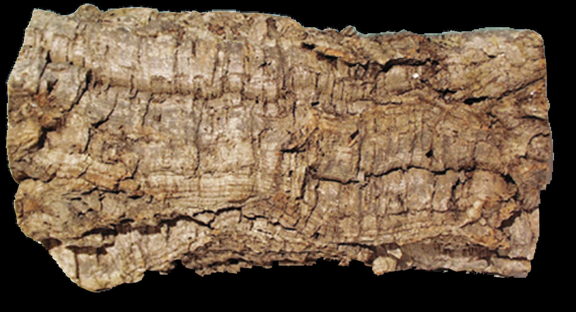 картинка кора деревьев на прозрачном фоне вырученные