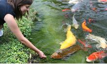 Die Algen Im Nachsten Jahr Vermeiden So Machen Sie Ihren Teich