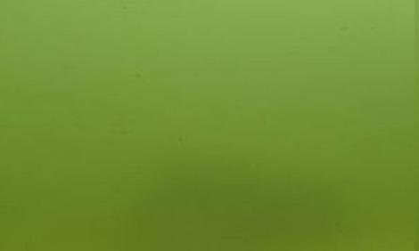 Jbl algopond forte for Gartenteichpflege algen