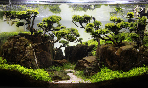 Proscape More Than Just Aquascaping