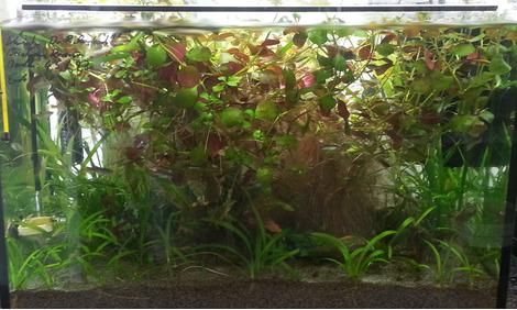 warum die pflanzen mit co2 doch besser wachsen. Black Bedroom Furniture Sets. Home Design Ideas