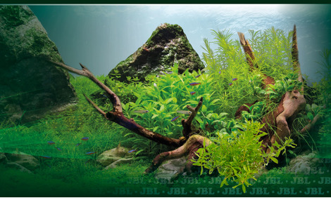 Aquascaping: sand, gravel or soil – which is best?