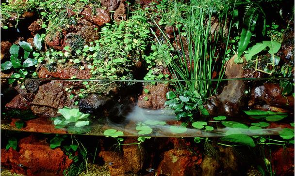 What Is An Aqua Terrarium Paludarium