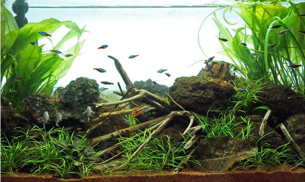 Möchten Sie Ein Stück Dschungelfluss Mit Dichtem Pflanzenwuchs In Ihrem  Wohnzimmer? Dieses Aquarium Zeigt Eine Schöne Unterwasserlandschaft Aus  Südamerika ...