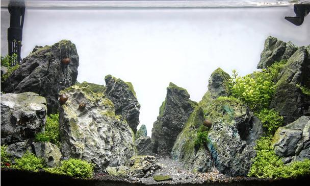 Aquascaping Aquarium Type Jbl Dreamscape