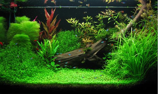 Aquarium Optimale Beleuchtung | Licht