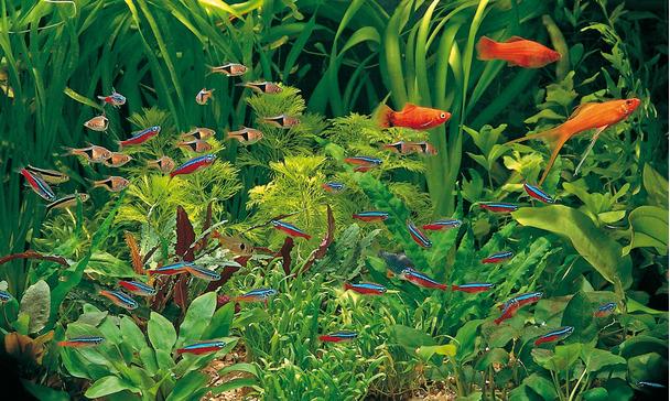 Beliebt Fischarten DY77