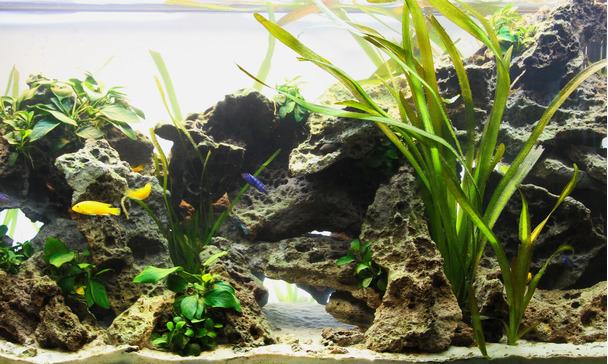 Aquarien Ehrlich Aquarium Juwel 60 Waren Jeder Beschreibung Sind VerfüGbar Fische & Aquarien