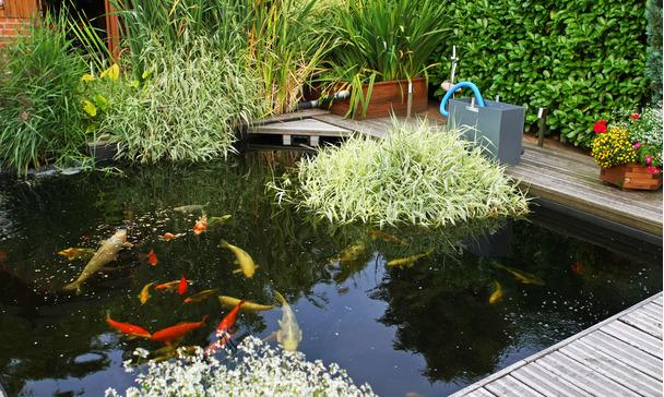 Natural Pond Or Artificial Pond