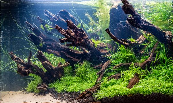 JBL PROSCAPE PLANT SOIL BROWN