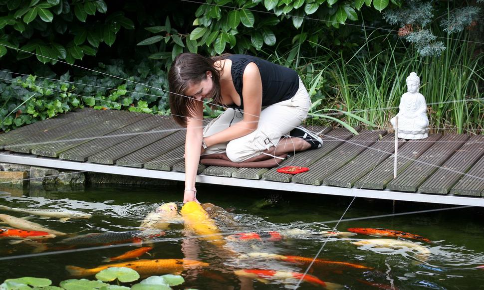 Teichfischernahrung