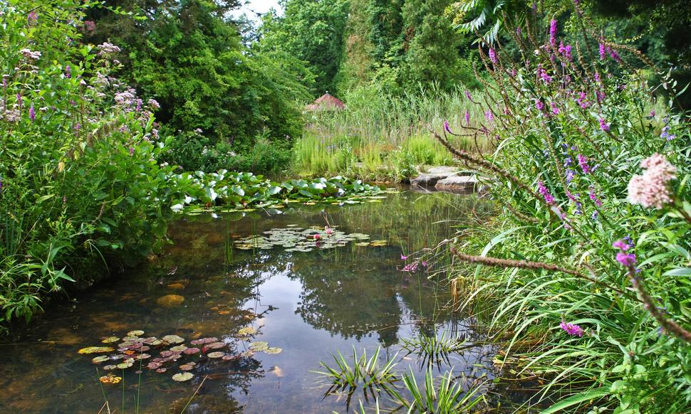 Außergewöhnlich Natürlicher Teich oder künstlicher Teich? #CL_99